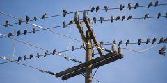 لماذا لا تتعرض الطيور للصعق الكهربائي عند الوقوف على أسلاك الضغط العالي