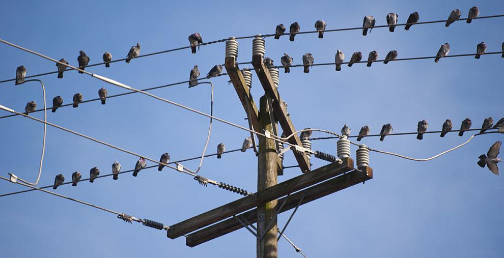 لماذا لا تتعرض الطيور للصعق الكهربائي عند وقوفها على أسلاك الكهرباء