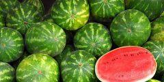 الطريقة الأفضل لشراء البطيخ الناضج دون خداعك